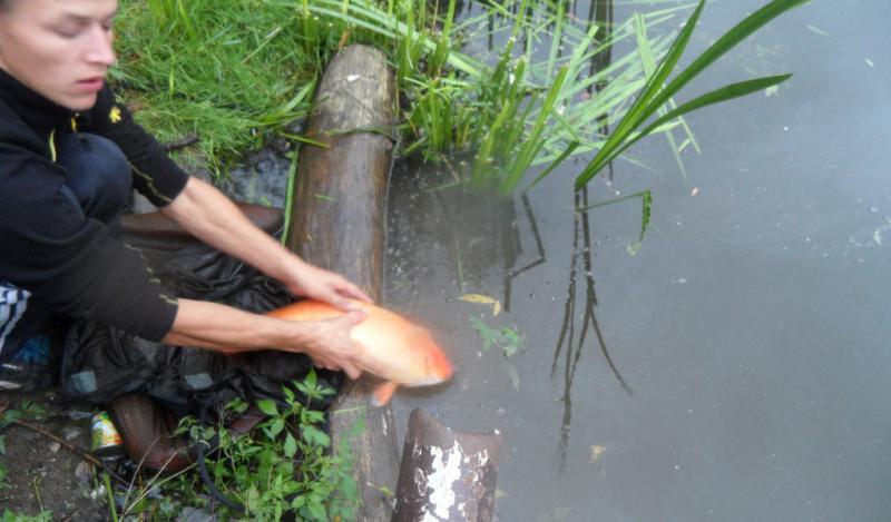 рыбалка на дачном