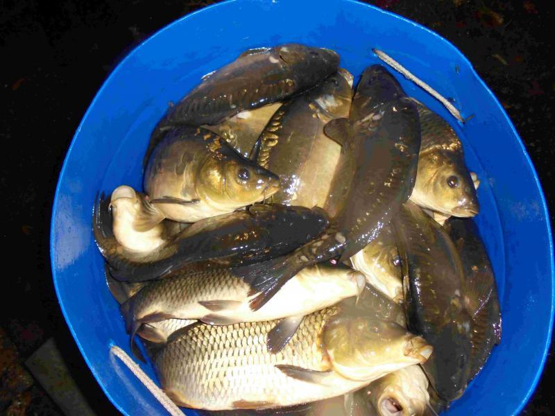 Рыбалка белая дача веб камера